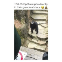 Lmao, Memes, and Smooth: This chimp threw poo directly  in their grandma's face He played it off so smooth lmao.