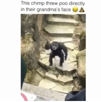 Memes, Tag Someone, and 🤖: This chimp threw poo directly  in their grandma's face Tag someone! Wait till the end 😂😂 Follow @thehoodsfinest (Me) for more