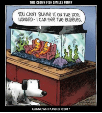 Funny, Memes, and Fish: THIS CLOWN FISH SMELLS FUNNY  YOU CANT BLAMe IT ON THe DOG  HOWARD ICAN Gee THe BUBBLes  UnKNOWN PUNster @2017 This clown fish smells funny. #UnKNOWN_PUNster