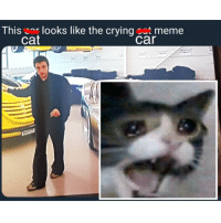 crying cat: This cor looks like the crying cst meme  cat  car