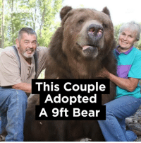 Couple Adopt 9ft Bear: This Couple  Adopted  A 9ft Bear Couple Adopt 9ft Bear