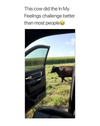 Damn Son, In My Feelings, and Cow: This cow did the In My  Feelings challenge better  than most people Damn son