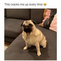Memes, Time, and 🤖: This cracks me up every time Volume up! Credit: @sophiathepugg