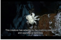 Me irl: This creature has adapted to the crushing pressure  and oppressive darkness. Me irl