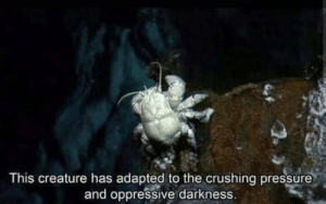 meirl by PhantomFuck MORE MEMES: This creature has adapted to the crushing pressure  and oppressive darkness. meirl by PhantomFuck MORE MEMES