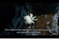 the crush: This creature has adapted to the crushing pressure  and oppressive darkness.