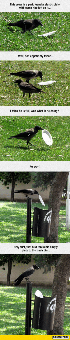 Trash, Tumblr, and Blog: This crow in a park found a plastic plate  with some rice left on it...  Well, bon appetit my friend...  I think he is full, wait what is he doing?  No way!  Holy sh*t, that bird threw his empty  plate to the trash bin  THE META PICTURE awesomesthesia:  This Crow Is Better Than Most People