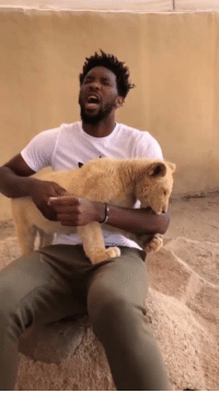 This cub just wanted to show Joel Embiid some love 🙃: This cub just wanted to show Joel Embiid some love 🙃