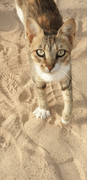 Cute, Saw, and Today: This cute cat, I saw in Tunisia today