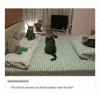"""Bitch, Memes, and Sleepover: """"this doesn't concern you Robert please close the door"""" they're having the sleepover """"bitch session"""" Do Not Disturb - Max textpost textposts"""