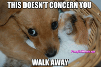 From Funny Cat Memes: THIS DOESNTT CONCERN YOU  Funny CatMemes.xyz  WALK AWAY From Funny Cat Memes