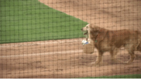 This dog brings water to umpires in exchange for head pats and is completely satisfied with it 😍😂 https://t.co/0bRwGX9ZsM: This dog brings water to umpires in exchange for head pats and is completely satisfied with it 😍😂 https://t.co/0bRwGX9ZsM