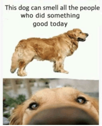Smell, Good, and Today: This dog can smell all the people  who did something  good today