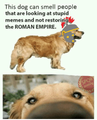 Empire, Memes, and Smell: This dog can smell people  that are looking at stupid  memes and not restoring  the ROMAN EMPIRE.
