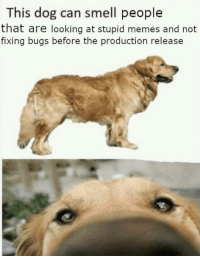Memes, Smell, and Dog: This dog can smell people  that are looking at stupid memes and not  fixing bugs before the production release Everyone's worst nightmare