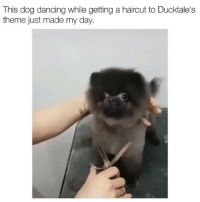 Dancing, Haircut, and Memes: This dog dancing while getting a haircut to Ducktale's  theme just made my day. This just made my day