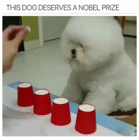 Funny, Nobel Prize, and Good: THIS DOG DESERVES A NOBEL PRIZE WHOS A GOOD BOY?! (Follow @boywithnojob for more)