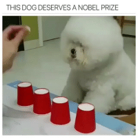 Girl Memes, Hell, and Dog: THIS DOG DESERVES ANOBEL PRIZE Really? Cause that was easy as hell.