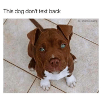 Text Back: This dog don't text back  IG: tank sinatra