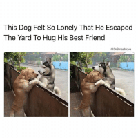 Montana has been lovely AF. More Montana-related caption heat on the way I AIN FINISHED 😂 bless up 😂😍😍😍 (@thenewsclan): This Dog Felt So Lonely That He Escaped  The Yard To Hug His Best Friend  @DrSmashlove Montana has been lovely AF. More Montana-related caption heat on the way I AIN FINISHED 😂 bless up 😂😍😍😍 (@thenewsclan)