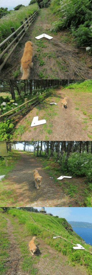 This dog followed the google earth guy.: This dog followed the google earth guy.