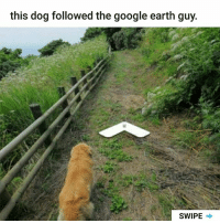 Google, Memes, and Earth: this dog followed the google earth guy.  SWIPE I wanna find him. | Follow @aranjevi for more!