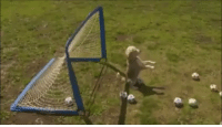 Soccer, Dog, and This: This dog > Cech and Mignolet combined https://t.co/Uu9vjsWgj9