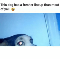 I'm dead 😂💀: This dog has a fresher lineup than most  of yall I'm dead 😂💀