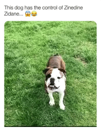 Memes, Control, and Zinedine Zidane: This dog has the control of Zinedine  Zidane...a What a touch! 😳🔥