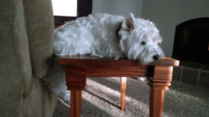 Dog, This, and Tons: This dog has tons of comfy seating