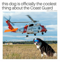 Top Gun has nothing on this.: this dog is officially the coolest  thing about the Coast Guard  @pop_smoke official  COAST GUARD Top Gun has nothing on this.