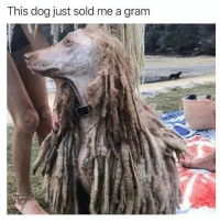 Memes, 🤖, and Dog: This dog just sold me a gram