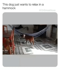 Fall, Homie, and Memes: This dog just wants to relax in a  hammock  @DrSmashlove I KEPT WAITING FOR LIL HOMIE TO FALL ON HIS FACE MISERABLY BUT HE DIDN'T. HE SUCCEEDED. LIL HOMIE DID IT. HE ACHIEVED FULL RELAXATION AFTER A DAY OF EXHAUSTINGLY CHASING CHIMKEN AND SNIFFING B00TY. GET IT DOGGO. U ARE MY HERO 😍😂😂