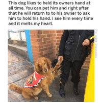 (@memezar) is a hecking awesome meme page!: This dog likes to held its owners hand at  all time. You can pet him and right after  that he will return to to his owner to ask  him to hold his hand. I see him every time  and it melts my heart. (@memezar) is a hecking awesome meme page!