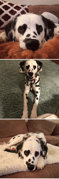 this dog literally has heart eyes https://t.co/3H5AjPAPLe: this dog literally has heart eyes https://t.co/3H5AjPAPLe