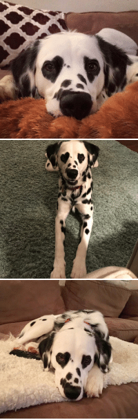 this dog literally has heart eyes https://t.co/UvTF8zFRZS: this dog literally has heart eyes https://t.co/UvTF8zFRZS