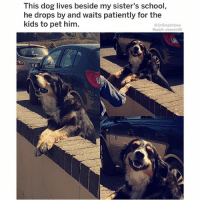 "Bless Up, Children, and Fall: This dog lives beside my sister's school  he drops by and waits patiently for the  kids to pet him.  @DrSmashlove  Reddit u/seanc90 Nicholas Dworet was a handsome young man with a wonderful smile who was going to swim at the University of Indianapolis. He won't be swimming at Indy this fall because he was shot and killed in the Parkland shooting. Scott Beigel was a geography teacher. He taught kids in Florida about the world beyond them. He won't be teaching children any more because he was shot and killed ushering students into a classroom - we know that because Kelsey Friend, one of his students, tearfully stated that he saved her life. Aaron Feis, a football coach, ran TOWARD the bullets to save his students - shot and killed - we know this on the authority of Colton Haab, a 17 year old student who witnessed all of it. Joaquin Oliver migrated from Venezuela at age 3 to have a better life here. He just got his citizenship last year. His friends called him ""Guac"". Shot and killed attending school. Alyssa Alhadeff. Martin Duque Anguiano. Jaime Guttenberg. Chris Hixon - athletic director - ""awesome husband"" - a teacher who gave kids lunch money if they needed it. Luke Hoyer. Cara Loughran. Gina Montalto. Alaina Petty. Meadow Pollack. Helena Ramsay. Alex Schachter. Carmen Schentrup. Peter Wang. That's too many names! Too many! Too many 😢. Honor them today. Honor them with change so that their death was not in vain. Let's make sure that thoughts and prayers don't carry the day this time. We can do more so let's do it. Bless up 😞"