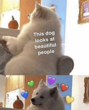 https://t.co/t0AnaOq20Z: This dog  looks at  beautiful  people https://t.co/t0AnaOq20Z