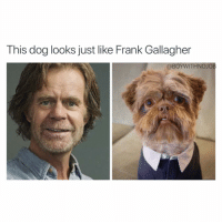 Drugs, Funny, and Shameless: This dog looks just like Frank Gallagher  @BOYWITHNOJOB Hopefully he doesn't do as many drugs 😂😂 shameless (@kokistateofmind)