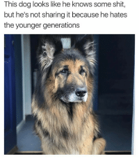 🤷🏽♂️🤷🏽♂️ follow @thebookof90s @demarcusknows: This dog looks like he knows some shit,  but he's not sharing it because he hates  the younger generations 🤷🏽♂️🤷🏽♂️ follow @thebookof90s @demarcusknows
