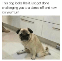 IM PUGGING READY: This dog looks like it just got done  challenging you to a dance off and now  it's your turn IM PUGGING READY