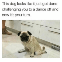 @blockbusterbanter has the funniest posts on IG😂😂: This dog looks like it just got done  challenging you to a dance off and  now it's your turn @blockbusterbanter has the funniest posts on IG😂😂