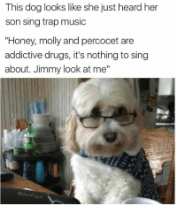 """Jimmy, we taught u better: This dog looks like she just heard her  son sing trap music  """"Honey, molly and percocet are  addictive drugs, it's nothing to sing  about. Jimmy look at me""""  @Masi opal Jimmy, we taught u better"""