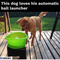 Memes, 🤖, and Dog: This dog loves his automatic  ball launcher  Ff SHAREABLY Look at his exhilaration! 🤣