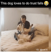 I can't TAKE IT: This dog loves to do trust falls  IG: @wat ki I can't TAKE IT