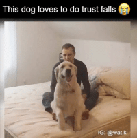 i cannot get over how cute this is: This dog loves to do trust falls  IG: @wat ki i cannot get over how cute this is
