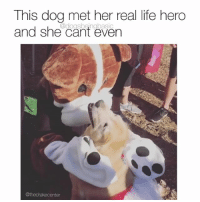 Life, Memes, and Happy: This dog met her real life hero  and she cant even  @dogsbeingbasic  @thedrakecenter Her smile is pure puppy kiss happy. Pup @thedrakecenter