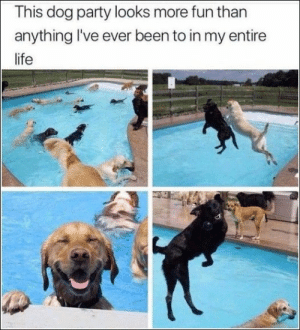 Funny Random Pics And Memes Dump – 40 Pictures #FunnyMemes #FunnyPictures #Weedhumor #Funnymemeshilarious #420memes #Funnyjokes #Bonesfunny #Funnypictures #Funny #Funnybabymemes: This dog party looks more fun than  anything I've ever been to in my entire  life Funny Random Pics And Memes Dump – 40 Pictures #FunnyMemes #FunnyPictures #Weedhumor #Funnymemeshilarious #420memes #Funnyjokes #Bonesfunny #Funnypictures #Funny #Funnybabymemes
