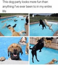 Who wants to go to a dog pool party: This dog party looks more fun than  anything l've ever been to in my entire  life Who wants to go to a dog pool party