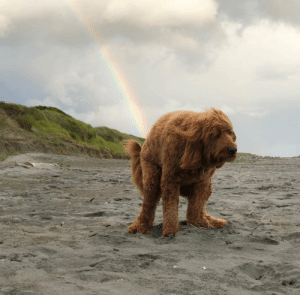 This dog poops rainbow.: This dog poops rainbow.